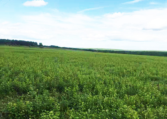 黑河市ballbet贝博网站生态农业发展有限公司